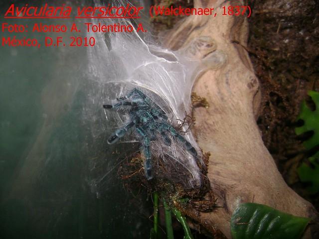 ¿Qué son las arañas? 4868738903_fb0f76e622_z