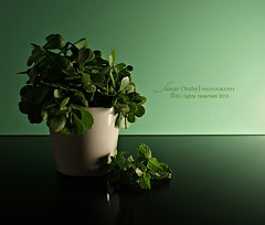 G r e e n (s@mar) Tags: green leaf polarizerfilter canon450d canonefs1855mmf3556is cokinpolarizerfilter