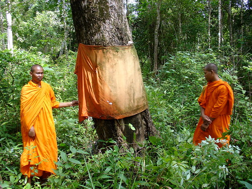 Buddhist Monks ordinating a tree.