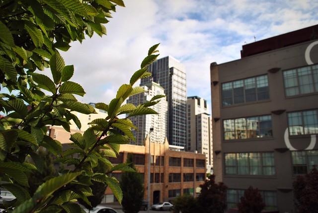 Seattle 299