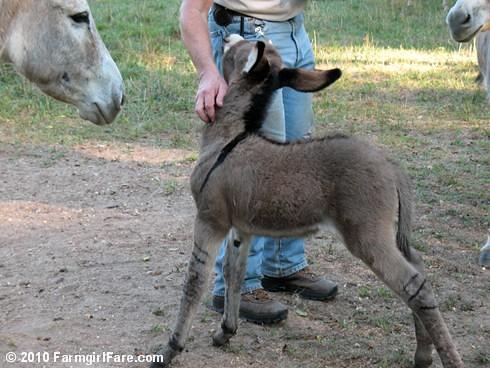 Baby Donkey 3