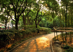 Streets of Gold (Krysta Shippelt (Larson)) Tags: china trees light sun reflection golden path bamboo
