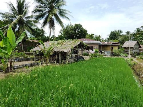 Bukit Lawang - Région (15)