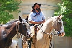 Retrato sureo (Eduardo Amorim) Tags: horses horse southamerica argentina criollo caballo cheval caballos cavalos pferde herd cavalli cavallo cavalo gauchos pferd pampa hest hevonen chevaux gaucho  amricadosul hst gacho  campero amriquedusud provinciadebuenosaires  gachos  sudamrica sanantoniodeareco suramrica amricadelsur  areco sdamerika gregge crioulo troupeau caballoscriollos herde criollos  tropillas pampaargentina camperos americadelsud tropilhas tropilla  crioulos cavalocrioulo americameridionale tropilha caballocriollo campeiros campeiro eduardoamorim cavaloscrioulos iayayam yamaiay pampaargentino iwalymseamtlfab iwalymsmamtlfab