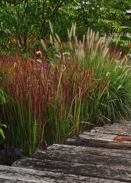 Railroad Tie Path with Bloodgrass