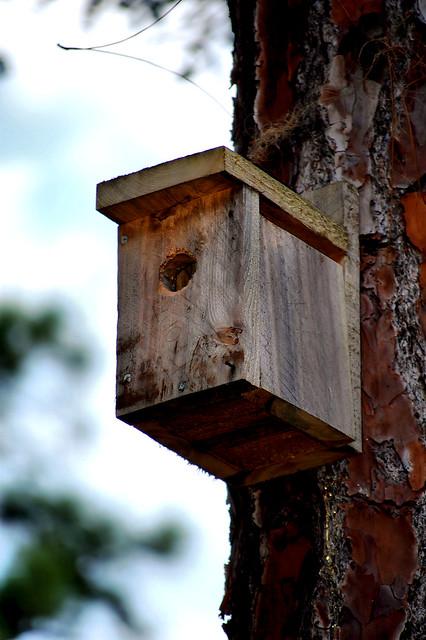 Rustic Little Bird House