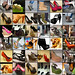 LOVE COLLAGE : Let's have a LOOK into the SHOE CLOSET : ENJOY THE HEELS & MORE : A