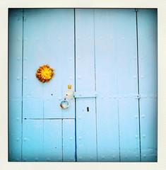 blue door-pola
