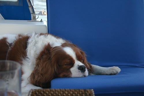 Kaycee snoozes
