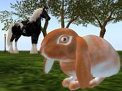 Insomnia Promo (Blair Kyrie) Tags: cute rabbit bunny bunnies sl secondlife usagi bunneh ozimals