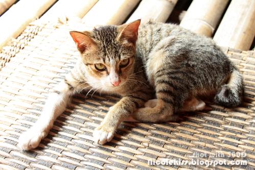 long house cat