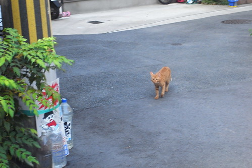 Today's Cat@2010-08-20