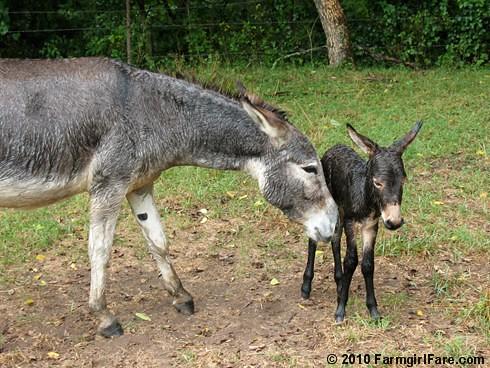 Esmeralda's Baby Boy 17