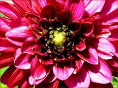 nature (grażus) Tags: red nature fleur rouge rojo grażus