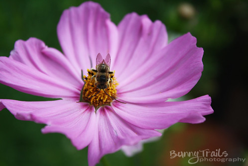 228-bee on cosmos