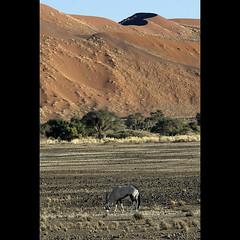 namibia 09 (respiraelviento) Tags: africa dune duna sesriem namibia oryx sossusvlei orix naturesfinest abigfave platinumphoto flickrdiamond orixgacela