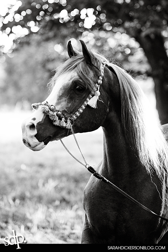 kansas city, missouri equine photography