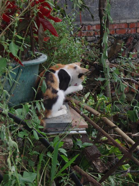 爱乾净的小花猫 | flickr – 相片分享!