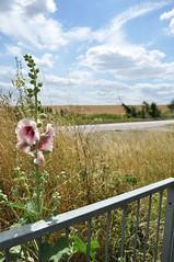 Beautiful day (Blues_Monkey) Tags: sky flower nature landscape nikon d5000 nikond5000