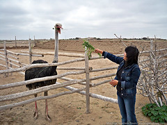 Visit to an ostrich farm