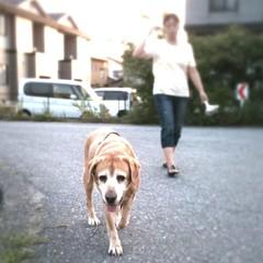 婆やの散歩