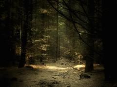 Mid-wood's twilight (soleá) Tags: lighting trees light holland tree nature dutch mystery forest dark landscape photography landscapes photo woods europe foto fotografie mysterious carmen solea soleá carmengonzalez