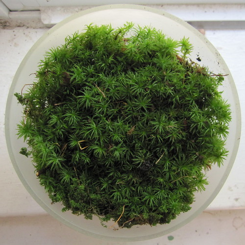mossarium 2, from the top