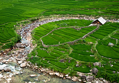 Rice Field House (Kasper Svanberg) Tags: new travel vacation bali food house mountain plant tree green texture nature wet water beautiful grass lines rural forest river indonesia landscape asian asia pattern view rice paddy terrace outdoor farm background hill farming grain harvest grow scenic culture peaceful scene vietnam valley plantation tropical production environment lush irrigation sapa terraced fieldsagriculture