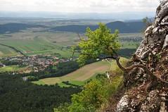 Mgitamm (anuwintschalek) Tags: autumn summer mountain berg landscape austria oak view sommer herbst september aussicht oaktree niedersterreich vaade 2010 tamm suvi eiche sgis hohewand 18200vr mgi nikond90 vanagram hoyahrtcirpluv mgitamm bergeiche