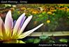 Good Morning , Siriraj /  อรุณสวัสดิ์จากศิริราช (AmpamukA) Tags: morning flower water hospital insect fly pond lily good bee thai ดอก siriraj สวัสดี บัว เช้า ศิริราช หน้า โรงพยาบาล totallythailand ampamuka ลิลลี่ พระรูป อรุณสวัสดิ์ แมลงบิน