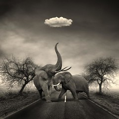 Maddox & Terrance On A Weekend Road Trip (mikonT) Tags: road cloud elephant surreal monochromatic innamoramento mikont bratanesque attributionsmamnaimieoutthankyou