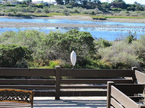 egret at the Adamson House