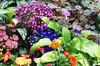Floral arrangement 010 (Bosc d'Anjou) Tags: floral newjersey somerville botanicalgarden dukegardens hillsborough dorisduke