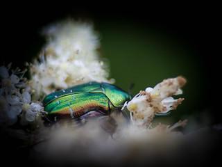 Relaxing Pollinator