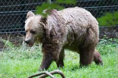 IMG_0554.jpg (wfvanvalkenburg) Tags: ouwehandsdierenpark beer familie