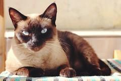 ❤ (annnedai) Tags: ♥ cat babycat lovecat