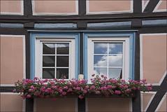 Windows / Fenster (Runemaker) Tags: windows fenster fachwerk halftimbered hannmünden germany deutschland lowersaxony niedersachsen flowers blumen