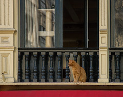 watching over Amsterdam (Thea Teijgeler) Tags: amsterdam kat cat