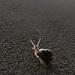149. Snail Climb