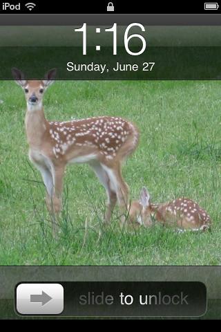 365/178 - Bambi