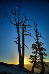 Sentinel Sunset, Yosemite (el.merritt) Tags: california blue sunset sun tree june yellow landscape dead golden 28mm tripod wideangle workshop yosemitenationalpark hdr ynp acratech sentineldome intothelight photomatix f110 ef24105mmf4l 5dmarkii emphoto41 philhawkinsworkshop