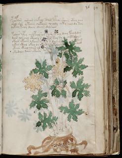 Voynich Manuscript Page070.jpg