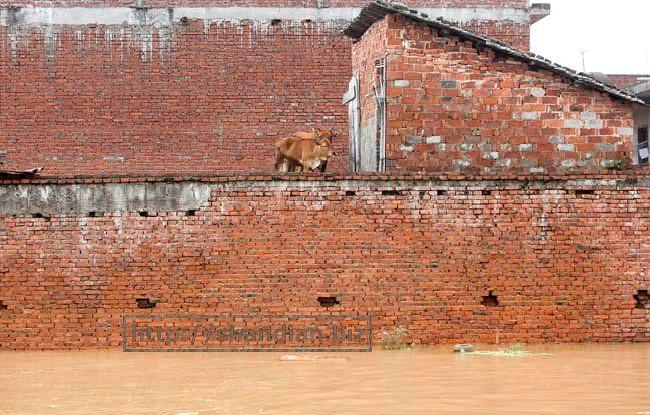洪水下的动物世界