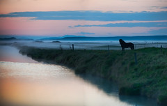 The Silent Horse in the Fog (Stuck in Customs) Tags: world travel light sky horse mist cold reflection nature water colors june fog night digital island photography volcano iceland blog high europe quiet silent dynamic stuck natural surreal eerie photoblog software processing imaging viking saga range hdr eruption tutorial trey sland travelblog midnightsun customs 2010 icelandic norse northatlantic midatlanticridge ratcliff hdrtutorial stuckincustoms treyratcliff photographyblog stuckincustomscom nikond3x sgur midnighttwilight