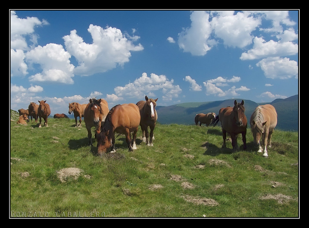 Caballitos en el Collado de Ezkanda (1164 m.)
