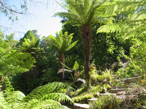 Love those tree ferns.