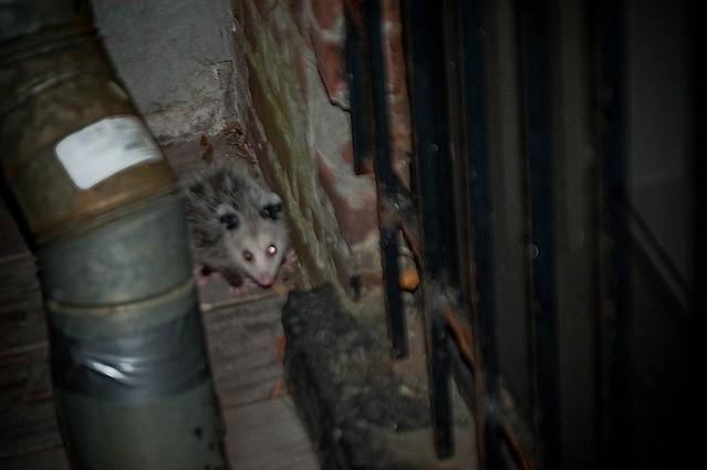 opossum2lge
