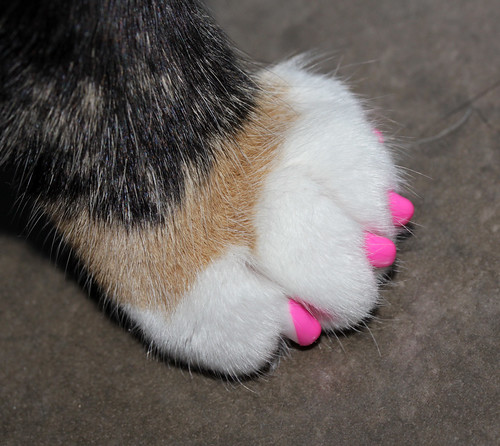 pink paws!