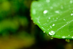 Thoda Greenish