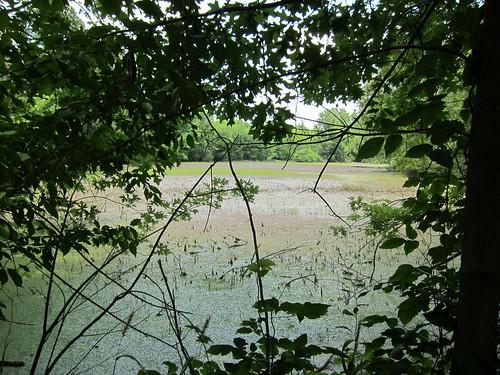 Caperton Swamp
